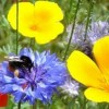 """Hackney biodiversity project to help """"clean air"""""""
