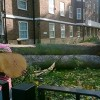 Hackney makes a rapid recovery after St Jude storm