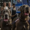 Paws for pounds: The Old Spittalfields dog-show