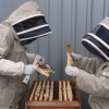Keeping Bees on the roof of the East London Mosque