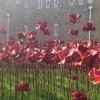 Seas of red: what the poppies mean to me