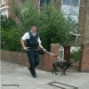 Dangerous dog tasered by police and held in wheelie bin after woman is bitten on the leg in Stoke Newington