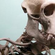 Skeleton Photo: Suburbanslice Flickr