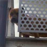 Neglected: Soldier the dog