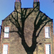 Photo: Falling Tree