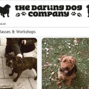 The Darling Dog Company runs courses and workshops