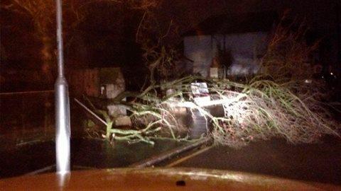 fallen tree in Bensham Manor Road pic: @ThorntonHHRT