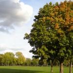 Victoria Park. Pic: Fin Fahey