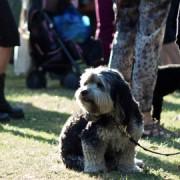 KK_dog at village fete_gimped_Jon James