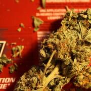 marijuana_blind_nomad_gimped