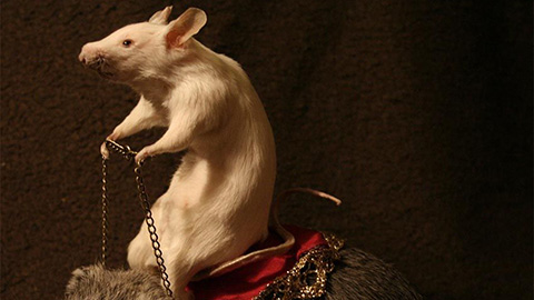 Taxidermy Mouse. Pic: Amanda Sutton.