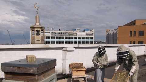Beekeeping at the East London Mosque. Pic: Jessica Chia