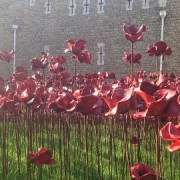 Poppies at The Tower of London. Pic: Emma Henderson