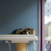 Lady Dinah's Cat Emporium. Pic: Tom Roberts
