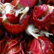 Are crayfish a popular Swedish dish in August? Pic: Stefan Leijon