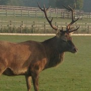 Pic: Jeremy the Stag in his new secret home. Credit: Croydon Council