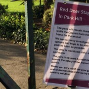 park_hill_deer_sign
