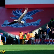 The Crystal Palace FC mascot, a bald eagle. Credit Graham Sawell