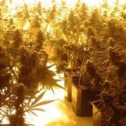 Images of plants taken during the raid. Pic: Metropolitan Police