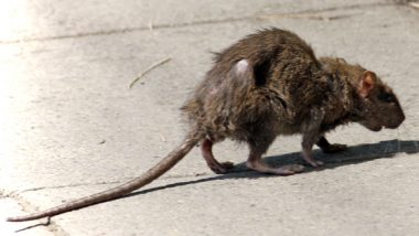 Rats in Butterfield Green worry parents and residents.