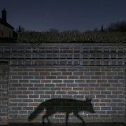 Shadow Walker. Pic: Richard Peters