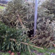 Residents have plenty of opportunities to recycle their Christmas trees in January.