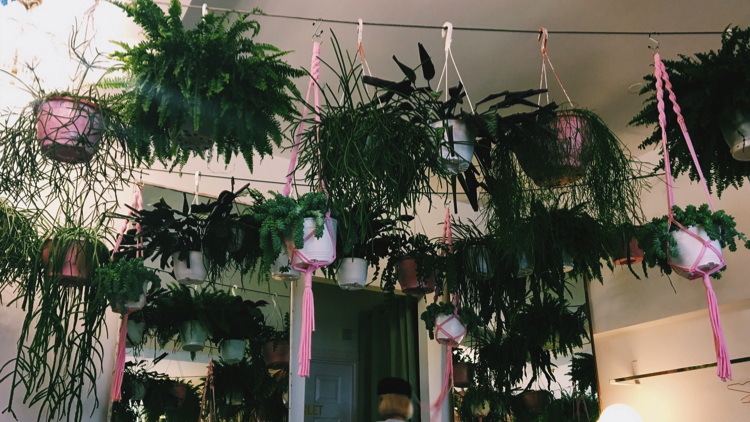 Succulents hanging from the ceiling of Palm Vaults. Pic; Holly Patrick.