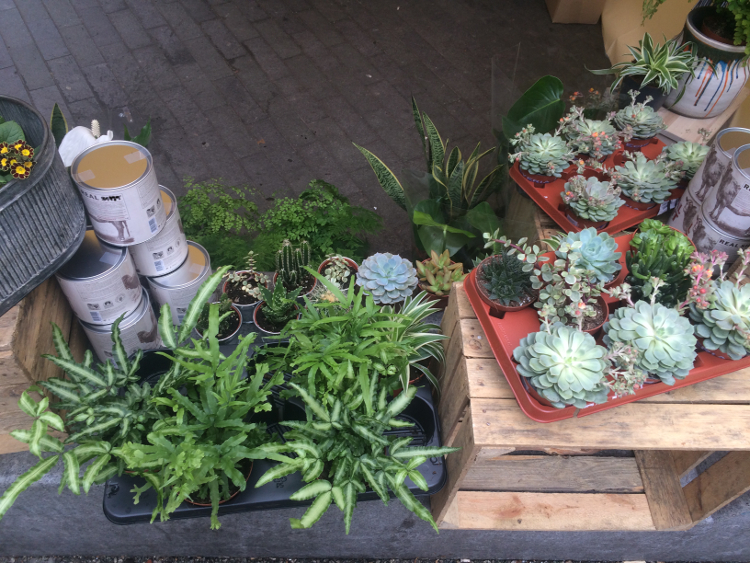 Potted, a stall selling stunning potted plants at Catford Food Market. Pic: William Taylor-Gammon